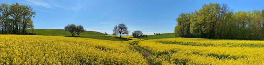 Colza field Biobased resource